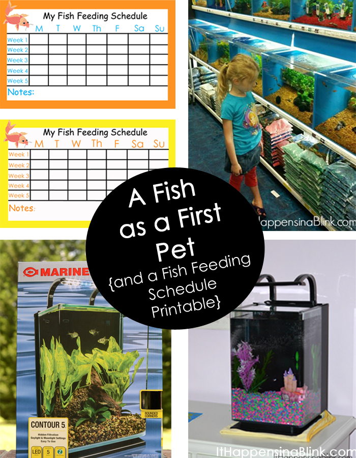 A Fish as a First Pet | ItHappensinaBlink.com