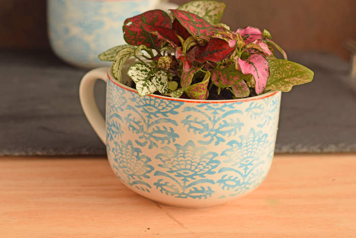 How to Gift Plants in a mug |  Need a quick gift idea? Pair a cute mug with a lovely plant! Great for get well gifts, teacher appreciation gifts, and more!