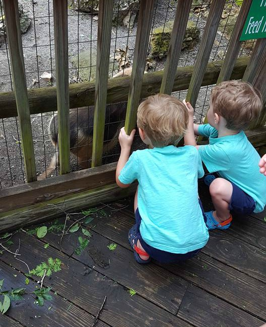 Visiting Mill Mountain Zoo, a great little zoo for preschoolers.