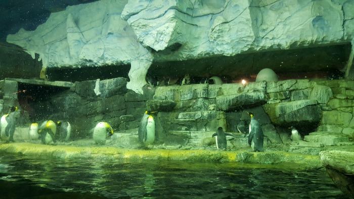 Visiting the Newport Aquarium AD