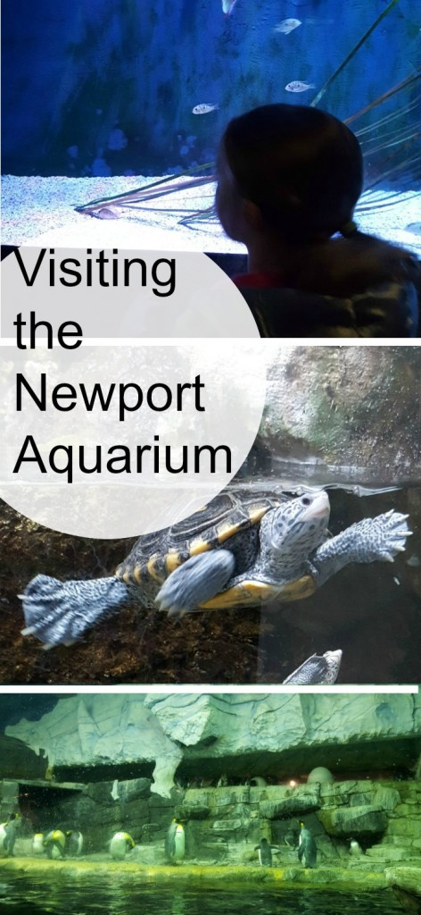 Visiting the Newport Aquarium AD
