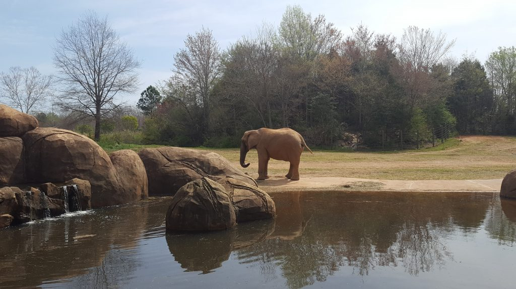 Things to Know before Visiting the North Carolina Zoo