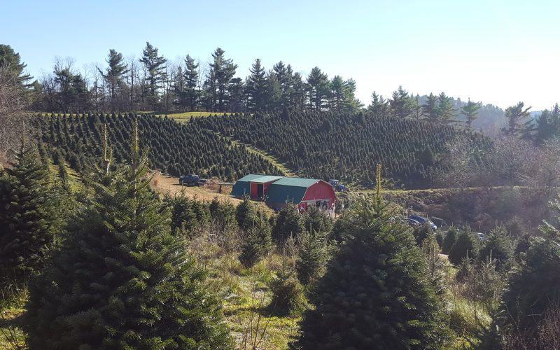 Why Choosing a Christmas Tree at a Christmas Tree Farm Makes a Great Family Tradition