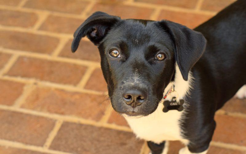 Puppy Hacks + Meet Rocky!