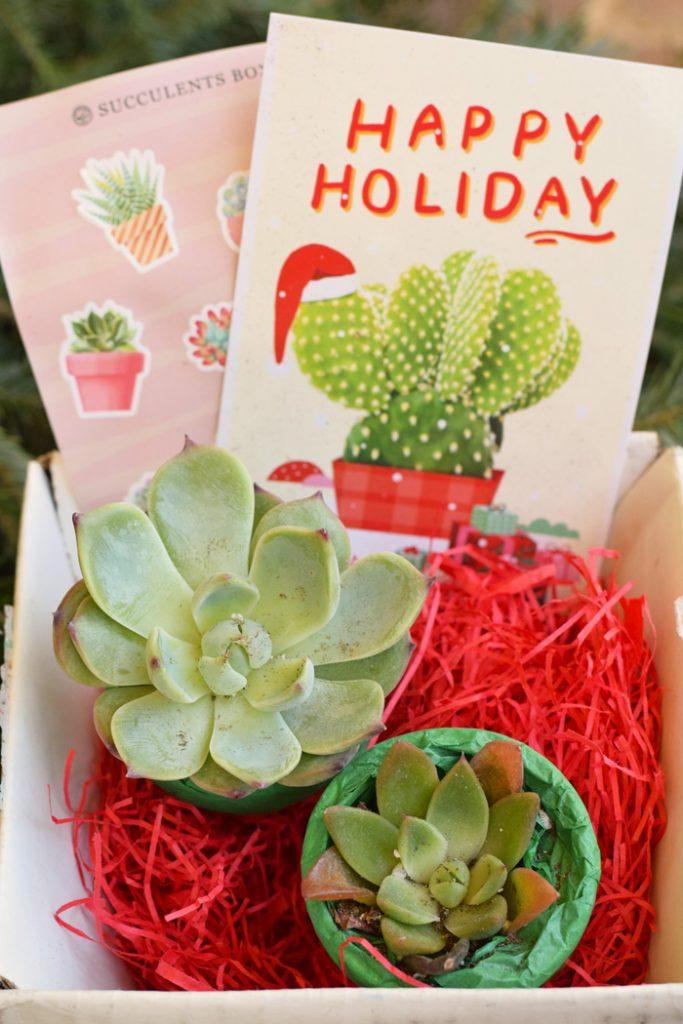 Succulents Gift Box