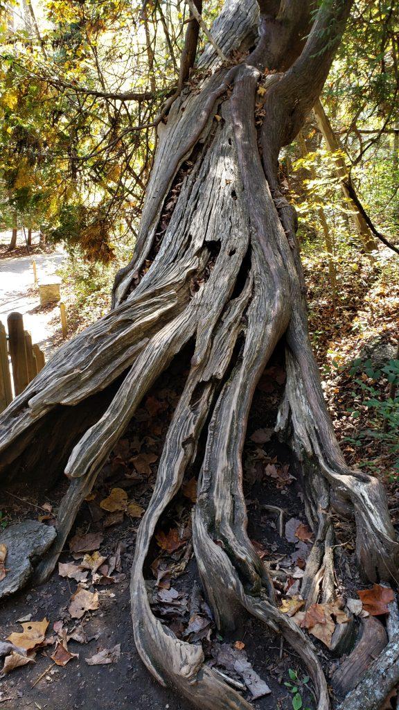 Interesting Tree on a Hike