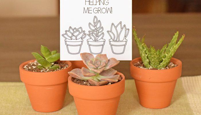 Succulent Teacher Appreciation Gift idea made with the Cricut