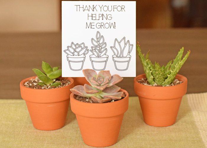 Succulent Teacher Appreciation Gift