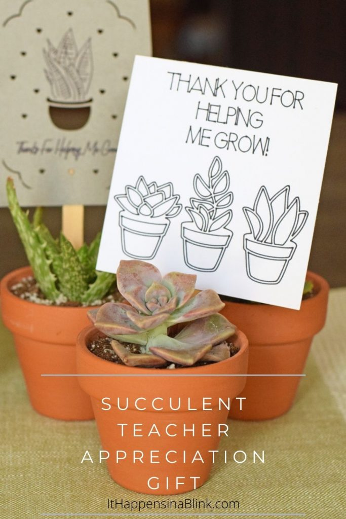 Succulent Teacher Appreciation Gift idea
